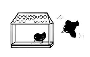 ptaki  www